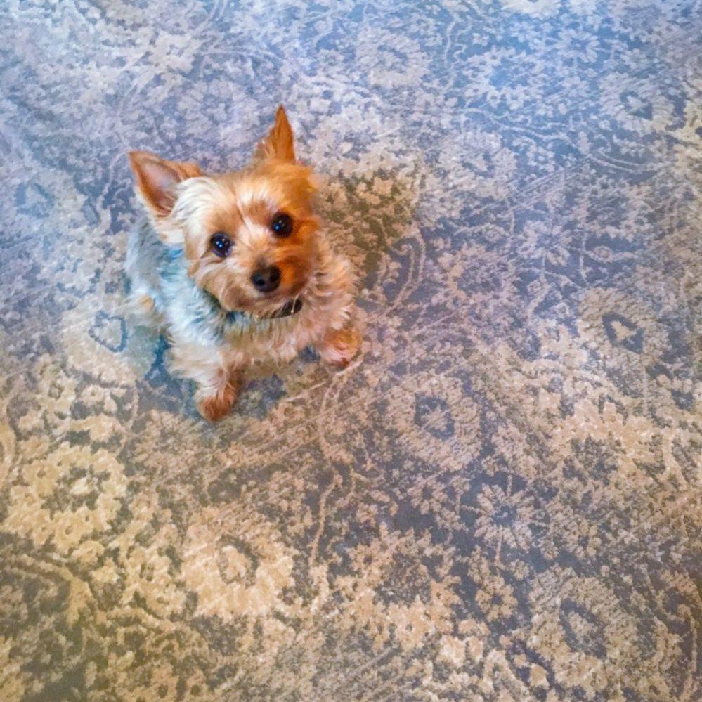 Stanton Carpet Sutton Wedgewood