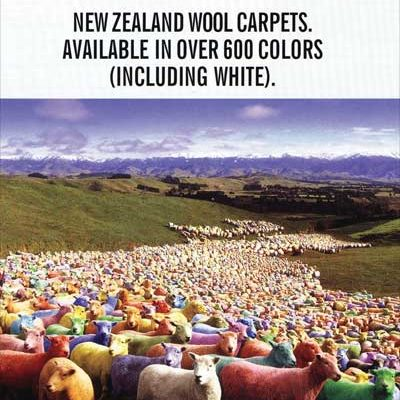 Wools Of New Zealand Ad Carpet Time Nyc